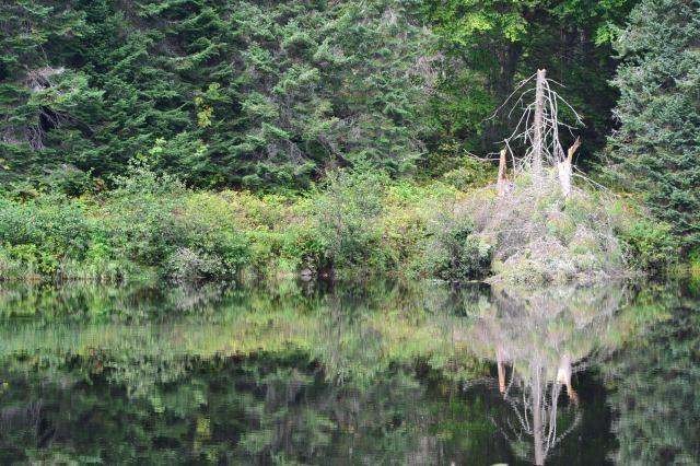 Reflets sur l'eau calme